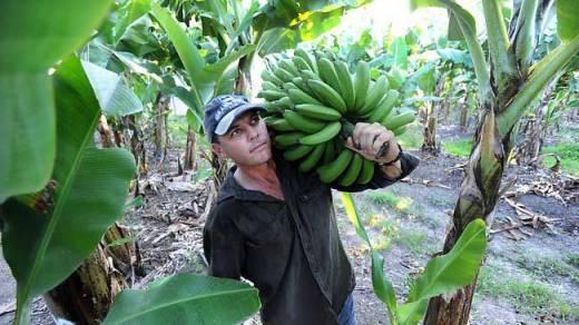 bananes-visa-2