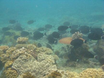 plongee-grande-barriere-corail-1