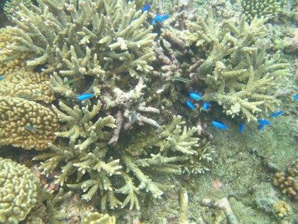 plongee-grande-barriere-corail-3