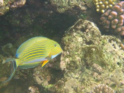 plongee-grande-barriere-corail-4