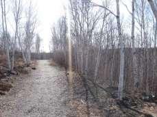 Une forêt en avril : comme en février, mais sans la neige.